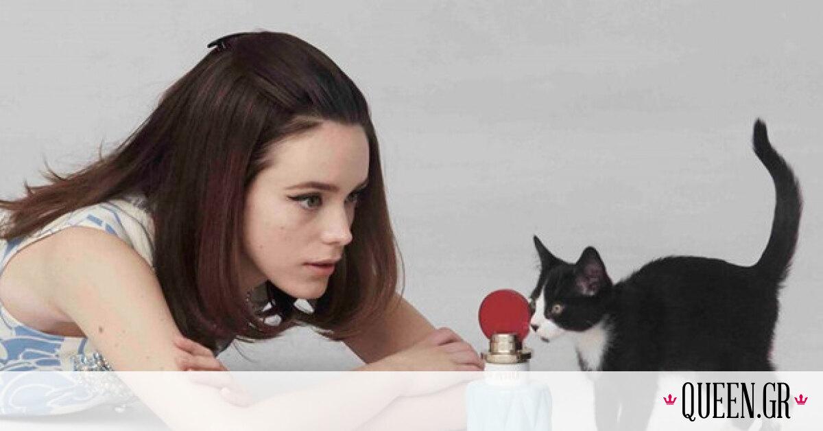 Έξι καμπάνιες μόδας με πρωταγωνίστριες… γάτες!