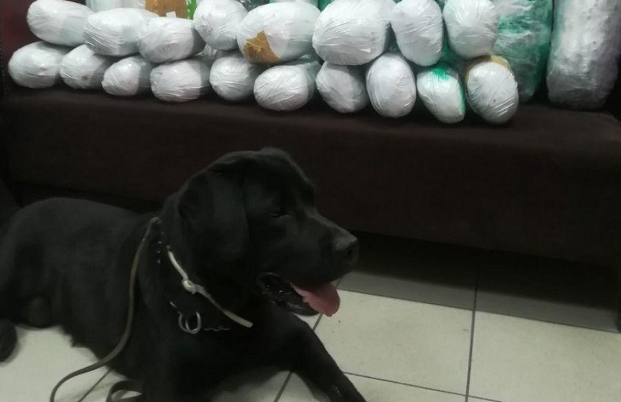 Θεσσαλονίκη: Σκύλος της αστυνομίας ξετρύπωσε 22 κιλά χασίς σε κοντέινερ (βίντεο)