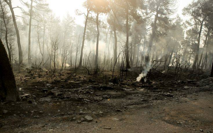 Υπό έλεγχο η φωτιά στην Ελάτη Κοζάνης