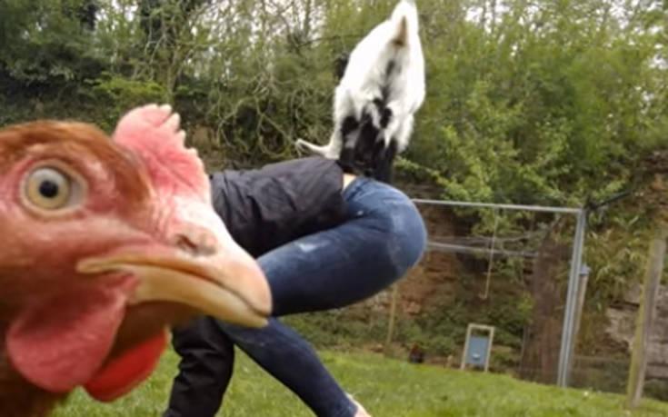 Κότα photobomber