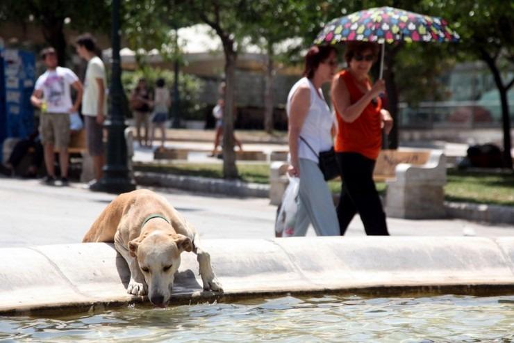 Δήμος Αθηναίων: Οκτώ κλιματιζόμενες αίθουσες και σαράντα ποτίστρες για τα αδέσποτα λόγω καύσωνα