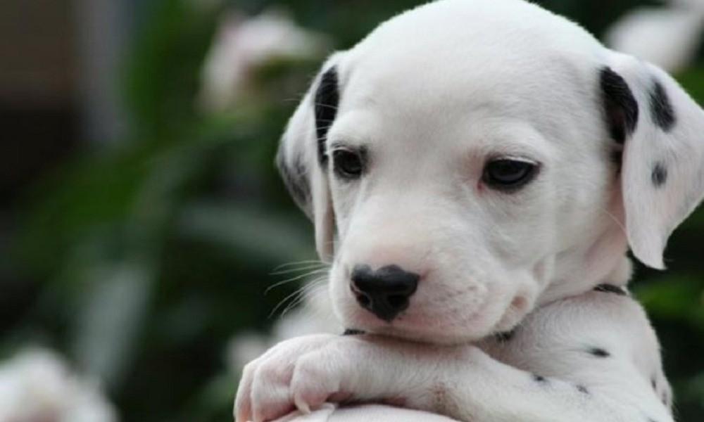 Κτηνωδία στην Καλαμάτα: Τραυμάτισε και προσπάθησε να κάψει ζωντανό το σκυλάκι των παππούδων του