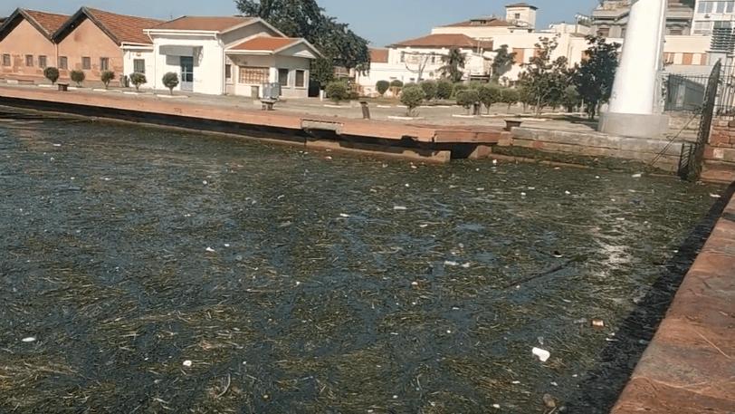 Γέμισε σκουπίδια ο Θερμαϊκός (βίντεο)