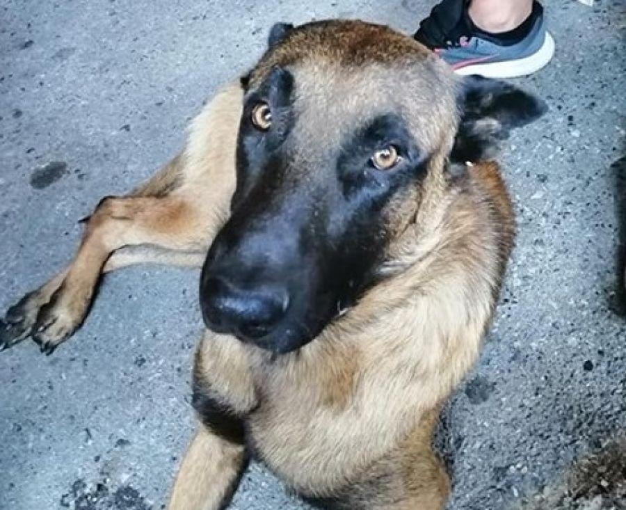 Δηλητηρίασαν τον σκύλο 54χρονου στη Βέροια – Αμοιβή σε όποιον γνωρίζει περισσότερα