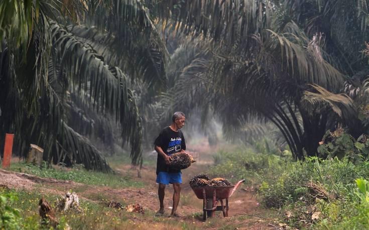 Οικολογική καταστροφή από τη βιομηχανία φοινικέλαιου
