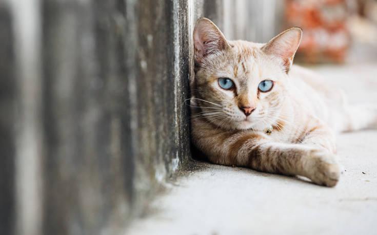 Δηλητηρίασαν μαζικά γάτες στη Λαμία