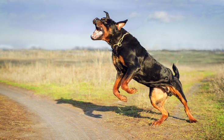 Αδέσποτα σκυλιά σκότωσαν τα ελάφια που βρέθηκαν νεκρά στην Κατερίνη