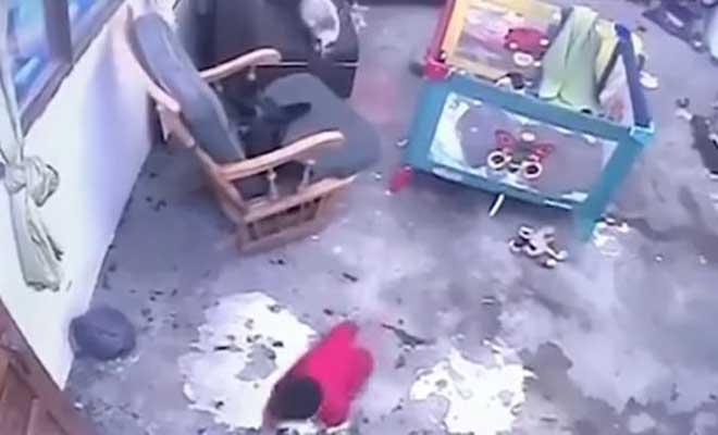 Γάτα σώζει βρέφος που μπουσουλάει, λίγο πριν πέσει από τα σκαλοπάτια [Βίντεο]