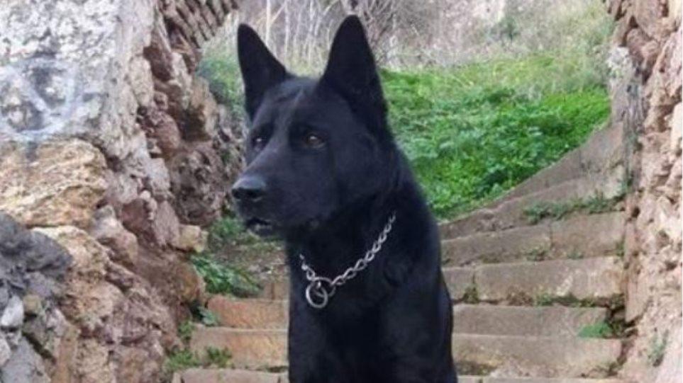 Ραγίζει καρδιές το «αντίο» της ΕΛΑΣ στον αστυνομικό σκύλο Blacky (εικόνα)