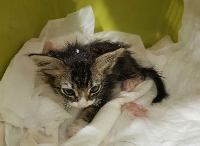 Πέθανε το τριών μηνών γατάκι που ξεκοίλιασαν ανήλικοι στη Μυτιλήνη