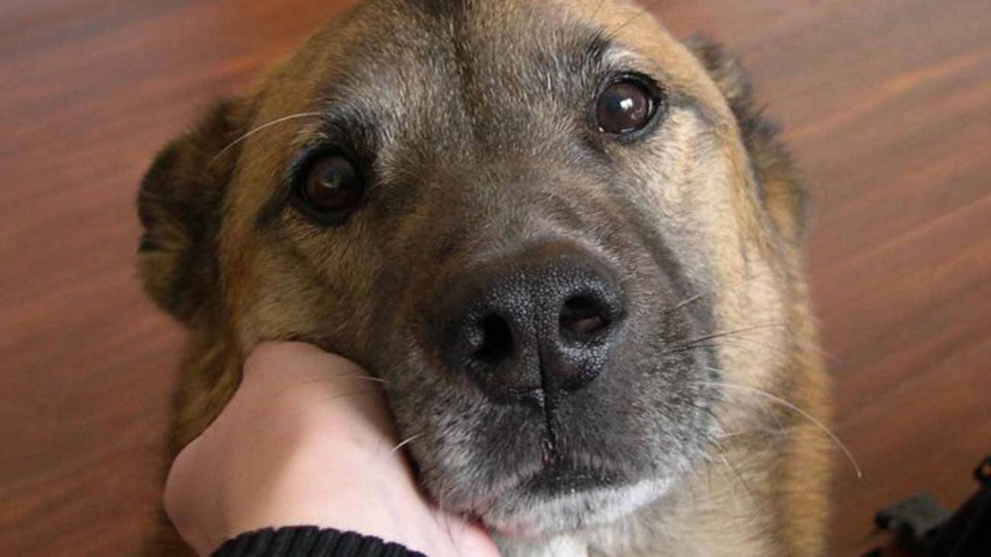 Φρίκη στα Πατήσια: Ηλικιωμένη πέθανε και την έφαγαν τα σκυλιά της