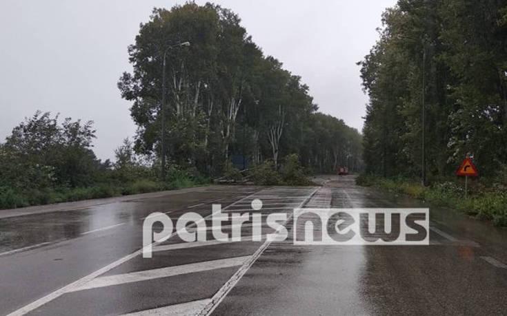 Σφοδρή νεροποντή στην Ηλεία: Προβλήματα στους δρόμους, πτώσεις δέντρων στην Εθνική Οδό