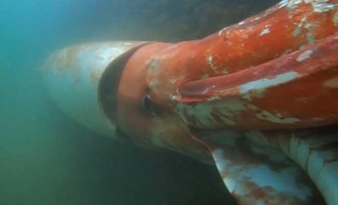 Γιγάντιο καλαμάρι παρακολουθεί υποβρύχιο σκάφος ενώ εξερευνά τον βυθό