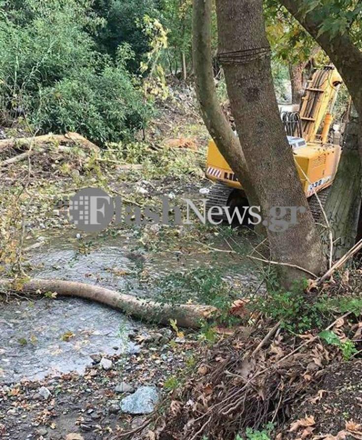 Κρήτη: Δέντρο κατάπλακωσε άντρα και τον σκότωσε
