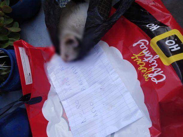 Φρίκη στη Ρόδο: Άφησε σακούλα με νεκρή γάτα στην αυλή φιλόζωης (εικόνες)