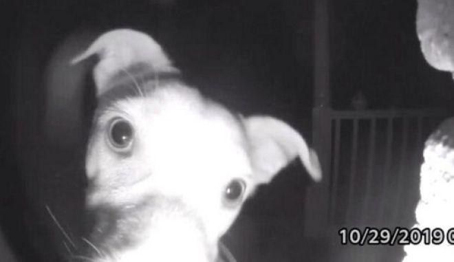 Σκύλος χτυπάει το κουδούνι στις 2 το πρωί – Τον είχαν κλειδώσει κατά λάθος έξω