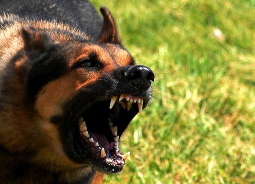 Από δαγκώματα σκύλου ο θάνατος της 70χρονης στο Πήλιο