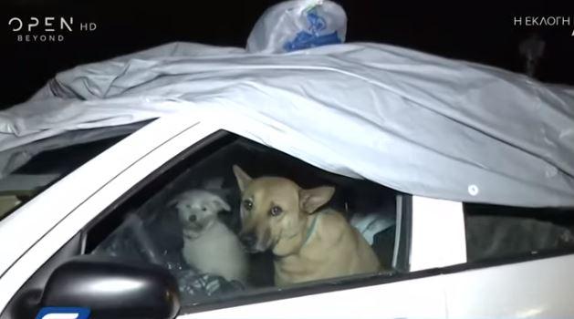 Άνω Πατήσια: Γυναίκα ζει μέσα στο αυτοκίνητό της με τα δυο σκυλιά της (βίντεο)