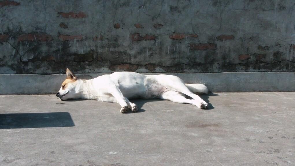 Κτηνωδία στην Κέρκυρα: Γυναίκα πέταξε σκύλο από το μπαλκόνι τρίτου ορόφου
