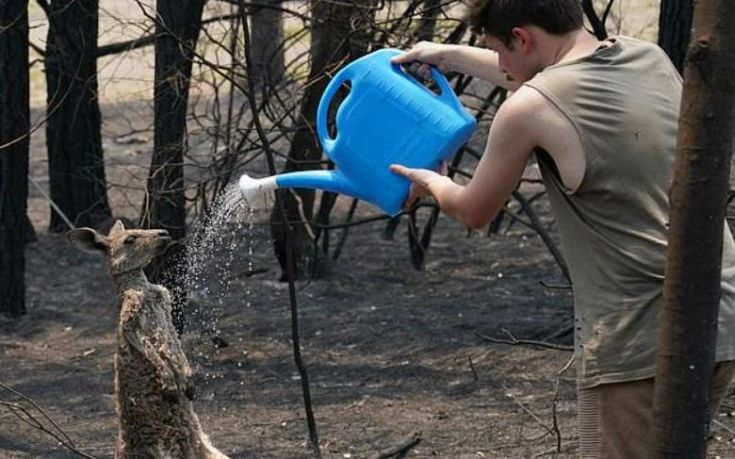 Αυστραλία: Η συγκινητική στιγμή που ένα καγκουρό ζητά βοήθεια από νεαρό αγόρι