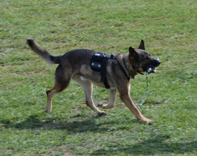 Βόλος: Έκρυψαν βεγγαλικά σε γήπεδο – Τα εντόπισε σκύλος της ΕΛΑΣ