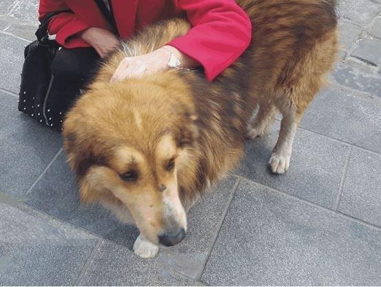 Θεσσαλονίκη: Κακοποιήθηκε ο Σόλων, ο σκύλος-μασκότ των Λαδάδικων (εικόνα)