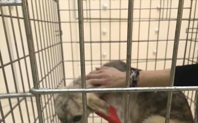 Φυλάκιση και χρηματική ποινή για κακοποίηση σκύλου στην Ηγουμενίτσα