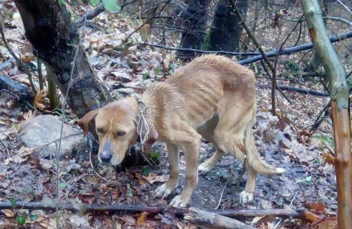 Ασυνείδητοι παράτησαν κυνηγόσκυλο για δεκαπέντε μέρες δεμένο σε δάσος στα Πιέρια Όρη (εικόνες)