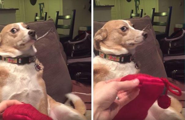 Σκύλος δεν παραδέχεται πως είναι ένοχος αλλά το πρόσωπο του άλλα λέει