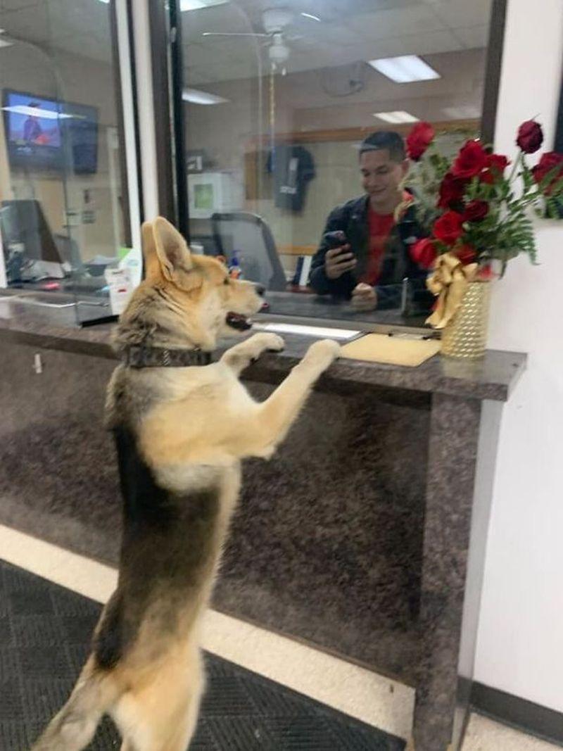 Σκύλος χάθηκε και πήγε να το αναφέρει σε αστυνομικό τμήμα