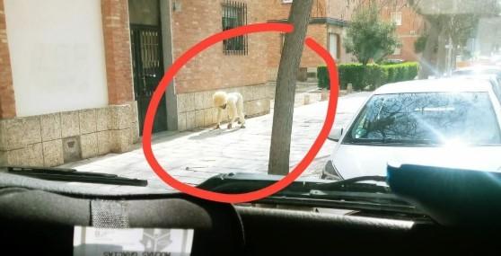 Απίθανο: Άνδρας «έσπασε» την καραντίνα και ντύθηκε σκύλος για να πάει βόλτα