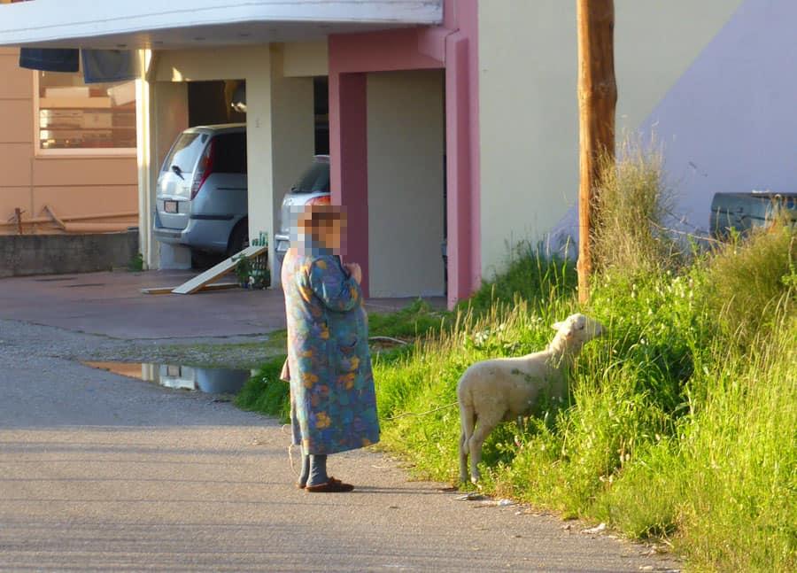 Κορονοϊός: Γιαγιά στο Αγρίνιο έβγαλε βόλτα το πρόβατο της για να βγει έξω από το σπίτι