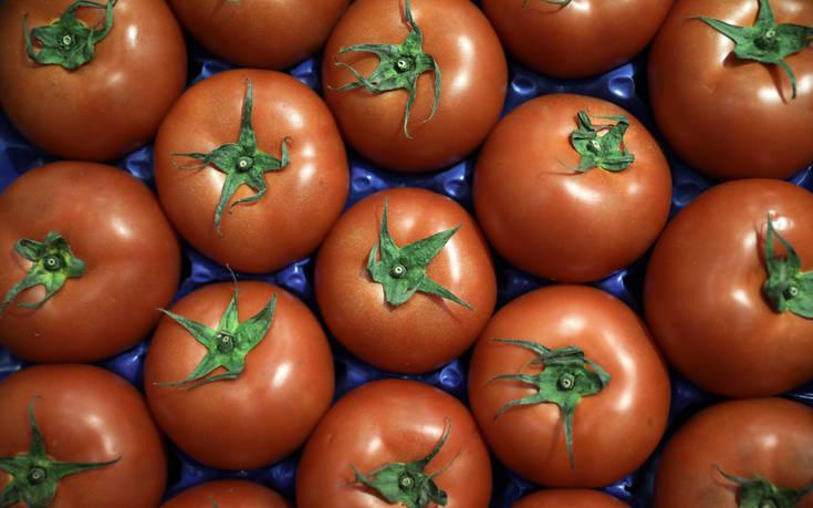 Ξεκινά η καταβολή της ενίσχυσης 2,8 εκατ. ευρώ προς τους καλλιεργητές βιομηχανικής τομάτας