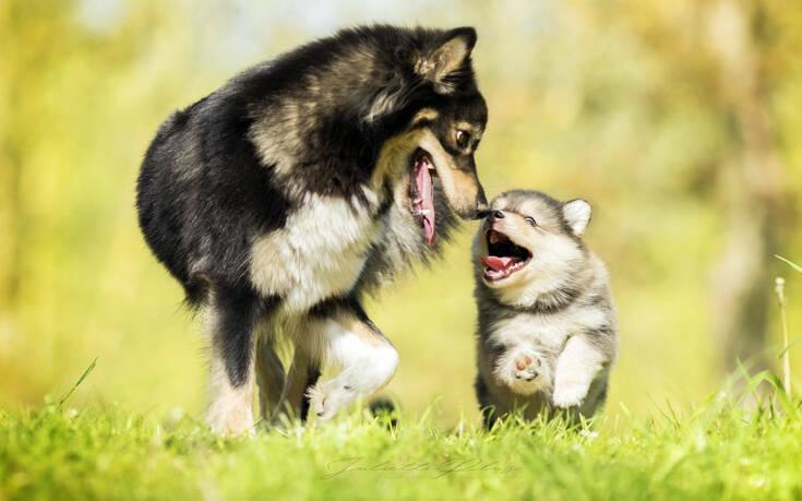 «Καμία απόδειξη πως τα ζώα και τα κατοικίδια μπορούν να μεταδώσουν κορονοϊό»