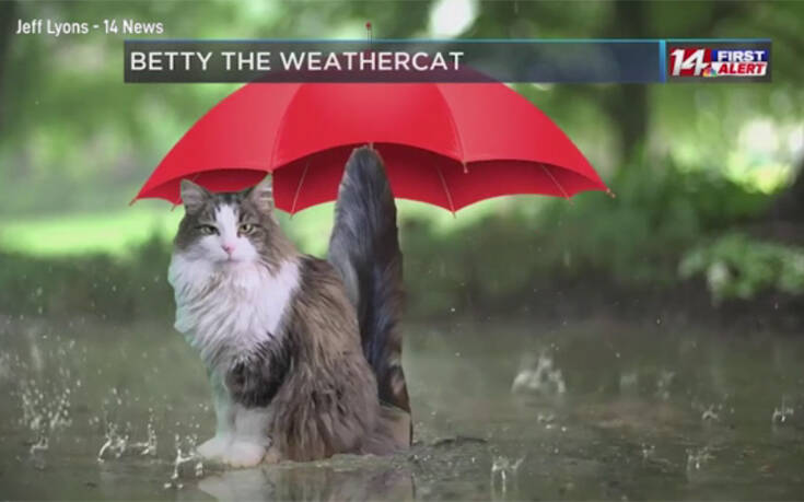 Γάτα «εισβάλει» σε δελτίο καιρού και γίνεται μασκότ