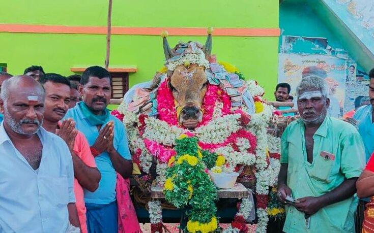 Ινδία: «Έσπασαν» την καραντίνα για να πάνε στην κηδεία ενός ταύρου