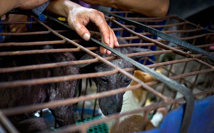 Αρχίζει στην Κίνα το φρικτό φεστιβάλ κατανάλωσης κρέατος σκύλου