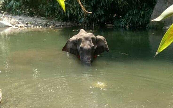 Ινδία: Συνελήφθη ένας ύποπτος για τον θάνατο της εγκύου ελεφαντίνας από κροτίδα