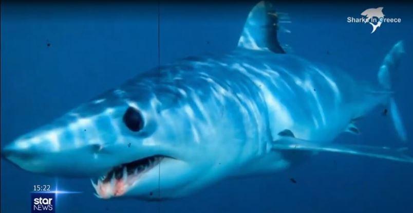 Ψαράς κατέγραψε σπάνιο καρχαρία στα ανοιχτά της Ζακύνθου [βίντεο]