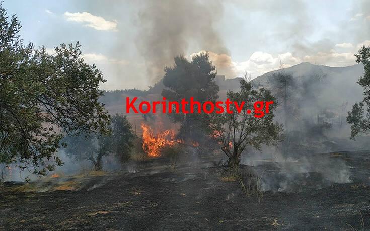 Φωτιά στις Κεχριές: Οι πρώτες εικόνες – Ενισχύθηκαν οι δυνάμεις της Πυροσβεστικής