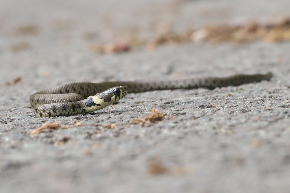 Τρίκαλα: Μάνα αντιμετώπισε φίδι που ανέβαινε στο κρεβάτι του παιδιού της