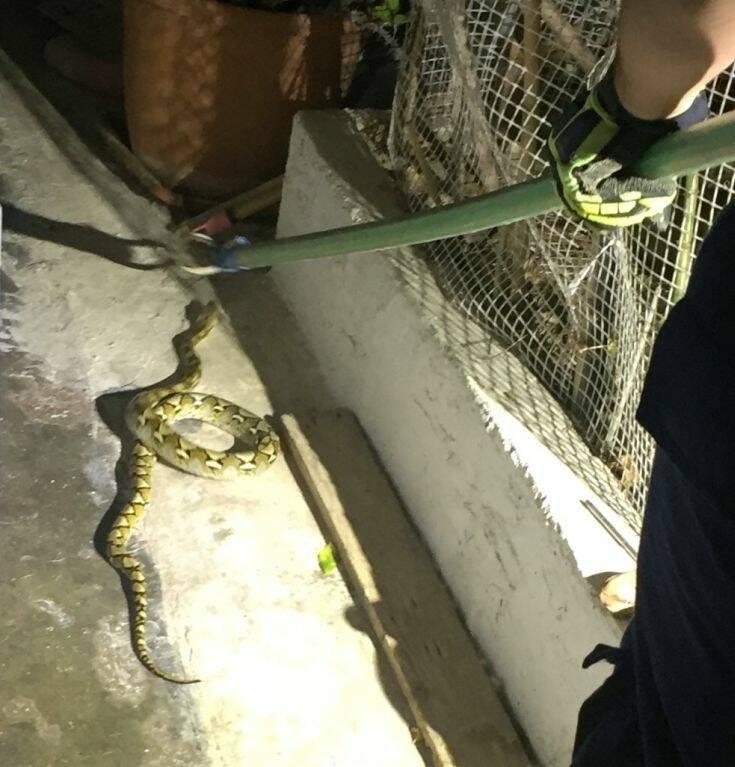 Γύρισαν στο σπίτι τους και βρήκαν ένα φίδι 2 μέτρων στο μπαλκόνι τους