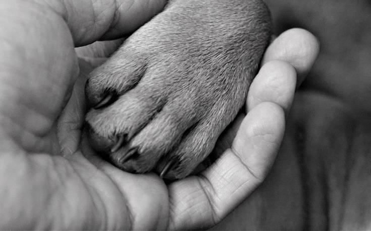 Εκπαιδευτής σκύλων: ένα ονειρικό επάγγελμα