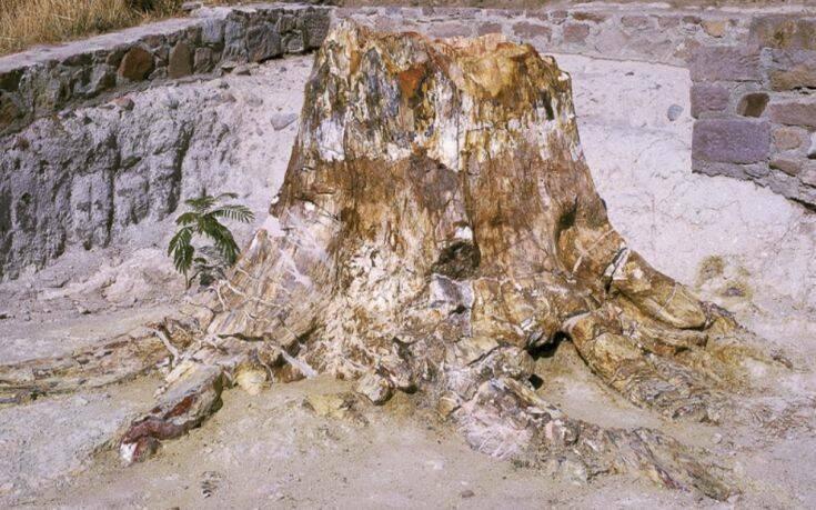 Απολιθωμένο Δάσος Λέσβου: Ευρήματα για τα είδη δέντρων που υπήρχαν και τις κλιματικές συνθήκες που επικρατούσαν στην περιοχή