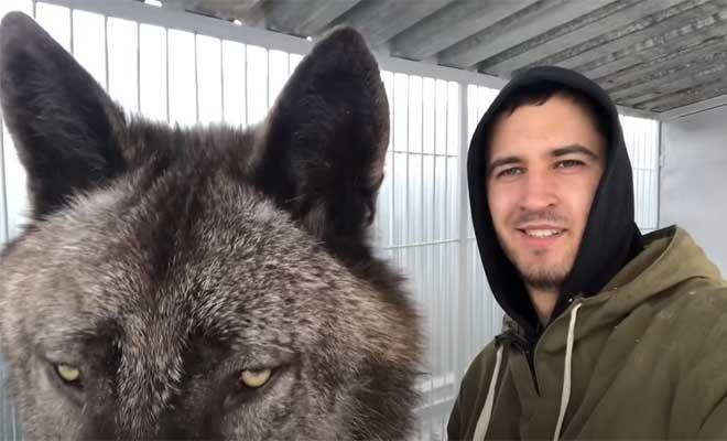 Θα μπορούσε να είναι πλάσμα από ταινία επιστημονικής φαντασίας – Δείτε πώς είναι ο μεγαλύτερος λύκος στον πλανήτη [Βίντεο]
