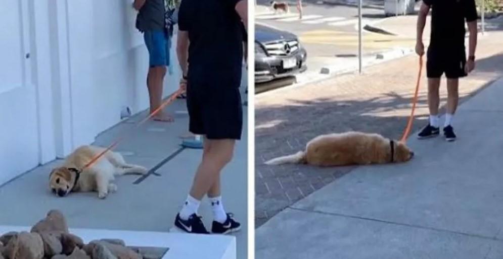 Σκυλο-τεμπελχανάς βαριέται τις βόλτες: Σωριάζεται κάτω και αρνείται να κουνηθεί