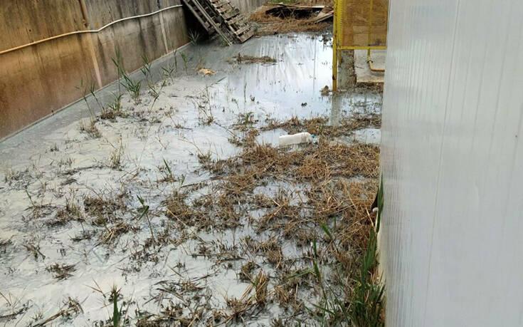 Βυρσοδεψείο στη Θεσσαλονίκη έριχνε απόβλητα σε διπλανά οικόπεδα