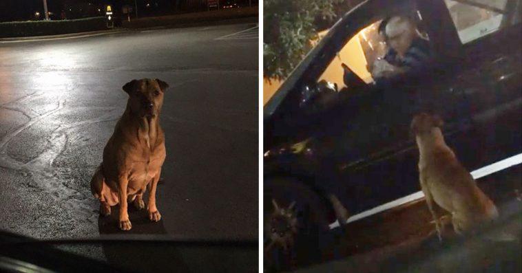 Σκύλος παριστάνει τον αδέσποτο για να τρώει τζάμπα χάμπουργκερ