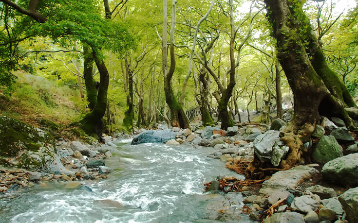 Τα ευρωπαϊκά δάση απειλούνται από την κλιματική αλλαγή