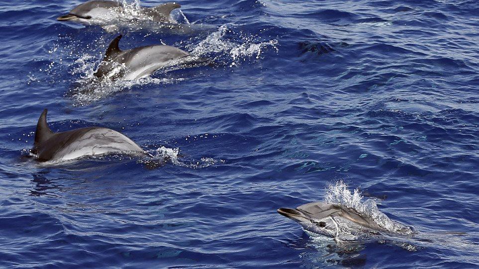 Κοντά στα 100 δελφίνια εντοπίστηκαν νεκρά στα ανοιχτά της Μοζαμβίκης
